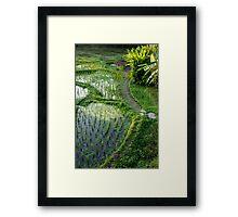 Path through The Paddies Framed Print