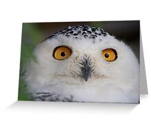 I've got my eyes on you Greeting Card