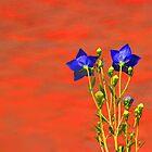 Shy Blue Flowers by Eileen McVey