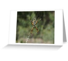 Argiope Spider  Greeting Card