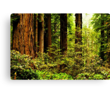 Giants of Nature Canvas Print