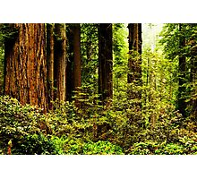 Giants of Nature Photographic Print
