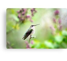 Hummingbird Charm Canvas Print