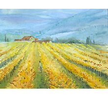 Vineyard, Tuscany by Mary Faux Jackson Photographic Print