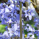 Purple Bell Blossoms by Kashmere1646