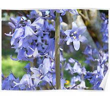 Purple Bell Blossoms Poster