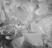 Peony Black and White by Vickie Emms