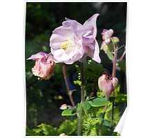 Pastel Bell Blossoms Poster