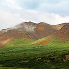 Sable Pass, Denali National Park by Eileen McVey