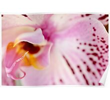 Orchid Kiss Poster