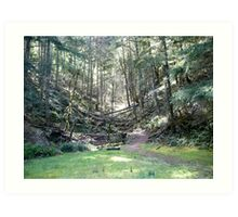 Another Path... Art Print