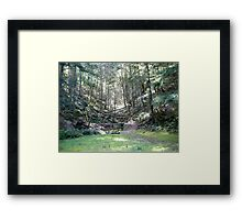 Another Path... Framed Print