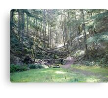 Another Path... Metal Print
