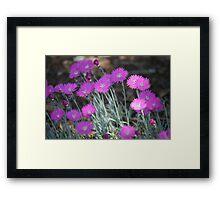 Purple Burst Bloom Framed Print
