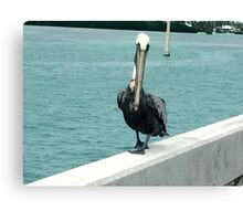 For the bird lover in you!!! Canvas Print