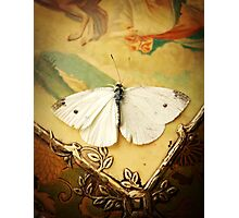 Antique White Butterfly  Photographic Print