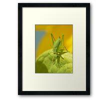 Speckled Grass Hopper  Framed Print