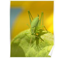 Speckled Grass Hopper  Poster