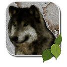 Wolf by sisterwolf