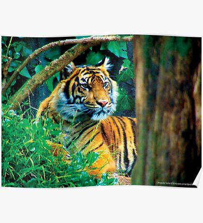 Tiger Photo Poster