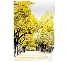 Autumn amber avenues in Paris Poster