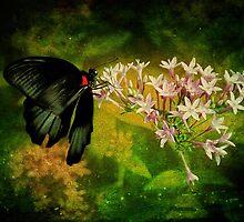 Fairyland by Lois  Bryan