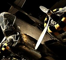 Beautiful Plane black and gold  by Jason Franklin