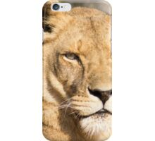 629 lioness iPhone Case/Skin