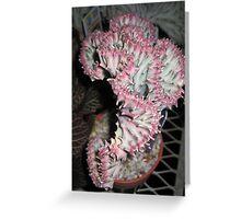 Coral Cactus Greeting Card