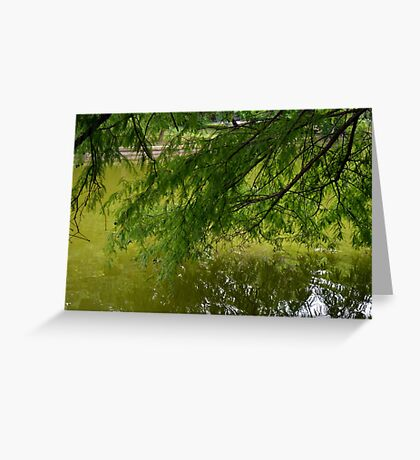Tree with the leaves in the water. Greeting Card