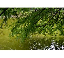 Tree with the leaves in the water. Photographic Print