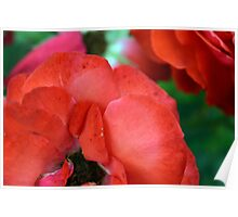 Macro on red roses petals. Poster