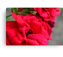 Macro on red roses petals. Canvas Print