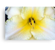 Macro on delicate white flower. Canvas Print