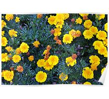 Beautiful yellow flowers texture. Poster