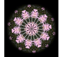 Pink Protea Wheels Photographic Print