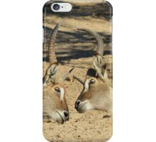 Waterbuck - African Wildlife Background - Fighting Eyes iPhone Case/Skin