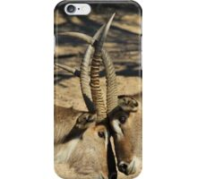 Waterbuck - African Wildlife Background - Locking Horns iPhone Case/Skin