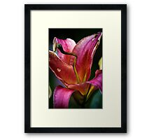 Lilly - Pink Framed Print