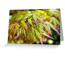 Maple Leaves Greeting Card