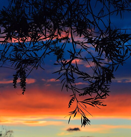 Sunset Silhouette by Sally Murray