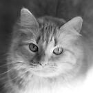 Sun Kitteh by sedge808