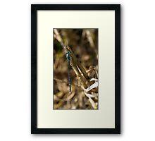 3 - Libellula Framed Print