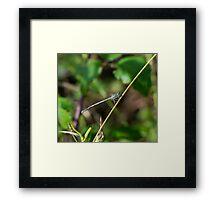 5 - Libellula Framed Print