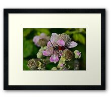 6 - Insetto Framed Print