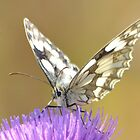 """"""" Marbled White On Thistle """" by Richard Couchman"""