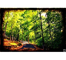 Wooded Road Photographic Print