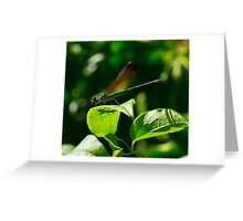 11 - Libellula Greeting Card