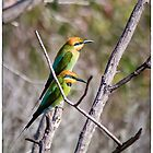 Rainbow Bee-eaters by Pete Evans