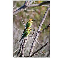 Rainbow Bee-eaters Photographic Print